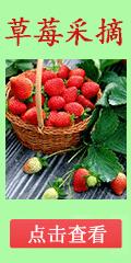 2017草莓采摘
