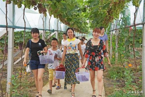 宜昌一葡萄园火了 大批游客采摘带动农户致富