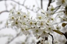 梨花节美景